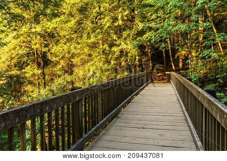 Wood Bridge On The Forest Part Of A Hiking Trail.