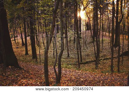 A Beautiful Hollow In A Deciduous Forest Lit By The Autumn Sun