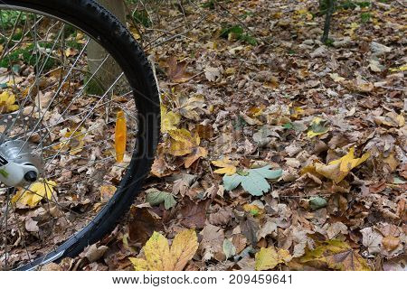 The black tire of a mountain bike rolling over yellow leaves on the ground Denmark October 16 2017