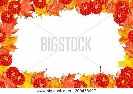 Bright colorful autumn foliage isolated on white background. leaf