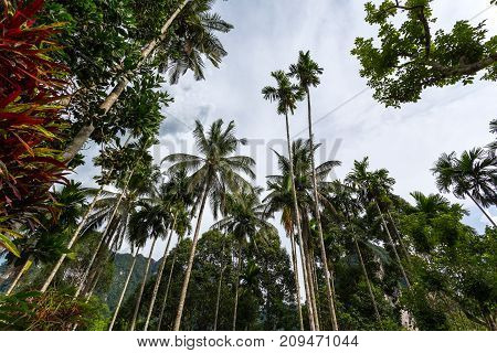 Palm trees in the jungle in thailand