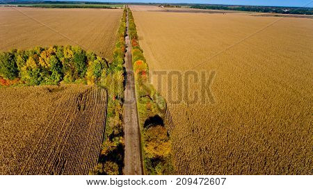 Aerial view of the field autumn road.