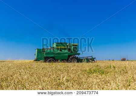 Harvester combine works on wheat or rye agricultural yellow field
