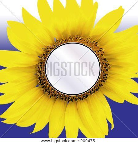Sunflower Insert On Blue