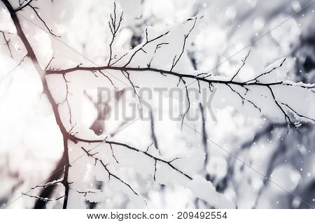 Branch under snow in forest. Beauty nature background