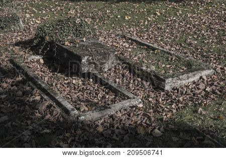 two old unkept dissolute abandoned graves with ivy and fallen leaves on cemetery faded colors poster