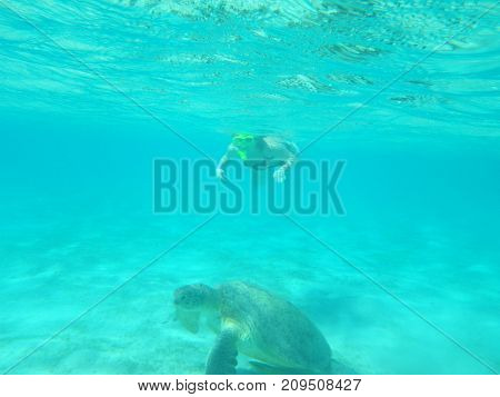 a woman swims underwater with a large sea turtle