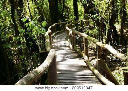 Wooden stair way to jungle among beautiful green foliage nature background. Selective focus and shallow depth of field.