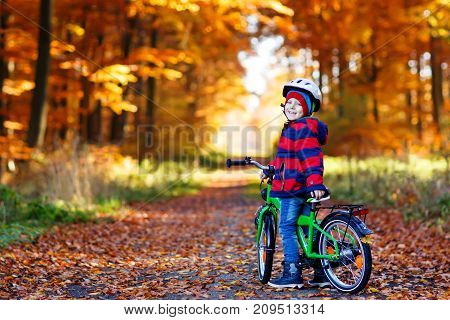 Little kid boy in colorful warm clothes in autumn forest park driving a bicycle. Active child cycling on sunny fall day in nature. Safety, sports, leisure with kids concept.