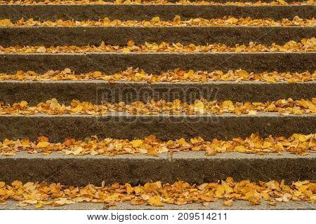 Staircase with autumn leaves, beautiful golden colored
