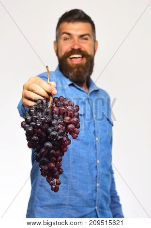 Farmer Shows His Harvest. Viticulture And Gardening Concept
