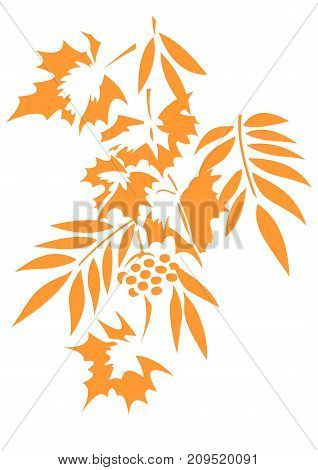 Vector image of tree autumn foliage. Maple, grapes, ash and mountain ash. Isolated on the background of a white color.