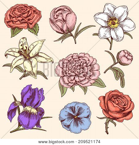 Bouquet vintage hand drawn style flowers bud wedding bloom elegant birthday nature design romantic flora holiday blossom vector illustration. Petal leaf floral bouquet.