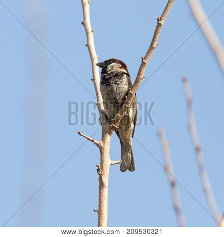 Sparrow on a tree . In the park in nature