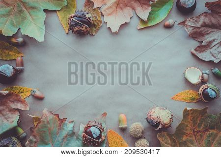 Flat lay composition for autumn holidays Thanksgiving Day greeting cards. Pine cones oak branches acorns leaves chestnuts on the kraft paper background. Top view