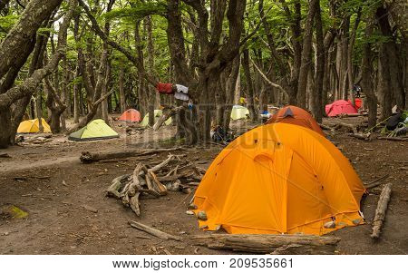 Group of tents in a wild campsite in a forest / Camp gear / Many camping tents in a wilderness area in the woods
