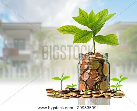 Gold coins and seed in clear bottle on photo blurred house background Business investment growth concept, 3D illustration