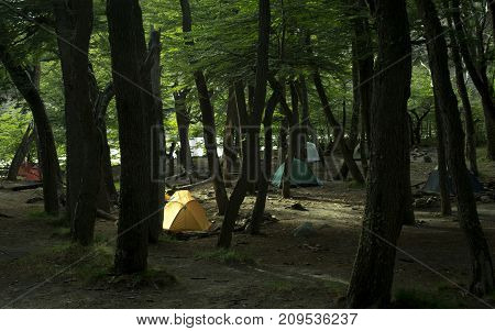 Group of tents in a wild campsite in a forest near a river / Camp gear / Many camping tents in a wilderness area in the woods