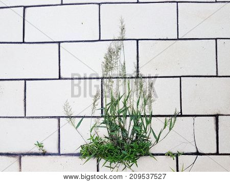 Close-up view of green grass embedded on white tile background in an abstract view of nature