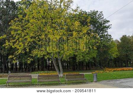 Popular  North park  for rest with autumnal old forest, wooden bench and flower garden in  Vrabnitsa district, Sofia,   Bulgaria