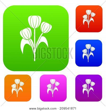 Flowers set icon color in flat style isolated on white. Collection sings vector illustration
