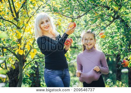 A young smiling mother tears off the red apples from the tree and gives them to her little daughter
