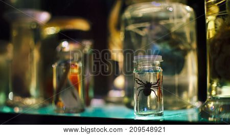 Spider in a jar on the shelf.
