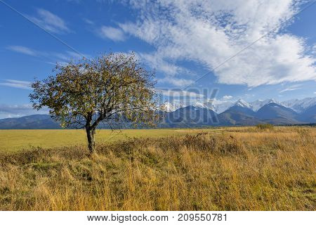 Beautiful landscape with autumn tree and fallen leaves with Carpathian mountains in the background. Beautiful autumn landscape in romanian Carpathian mountains with high peaks covered with snow.