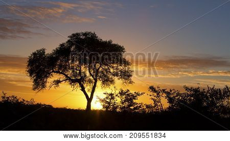African sunset with a tree silhouette and the large orange sun