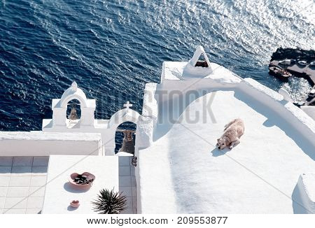 A dog relaxing on rooftop at Santorini