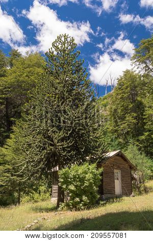 Small shelter near a forest in the mountains / Wood cabin isolated in the wilderness