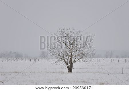 Frozen tree on winter field and grey sky