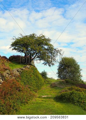beautiful grassy pathway at the top of a hill with heather on a rocky outcrop with small tree and bush