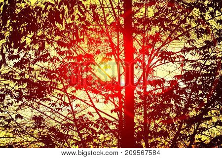 The Silhouette Of The Trees And Orange Sky In Evening With Flare