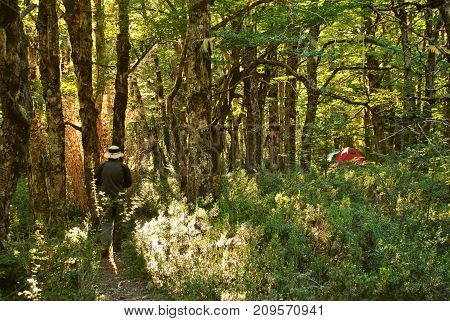 A man walking to his camping red tent in the woods / Wilderness camp area / Camping gear / Person exploring