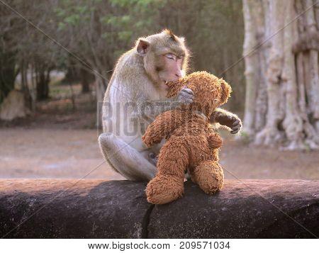 Monkey kissing doll in Siem Reap Temple