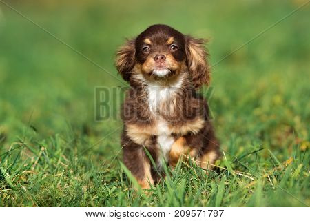 adorable mixed breed puppy sitting on grass