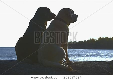 Best friends. Two dogs sitting on a Cliff watching out to the sea.
