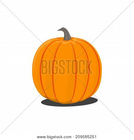 Vector color illustration of cartoon Halloween pumpkin on white background. Object image to create original graphic design
