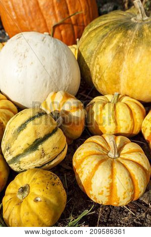Close up of gourds and pumpkins together in a display during October.