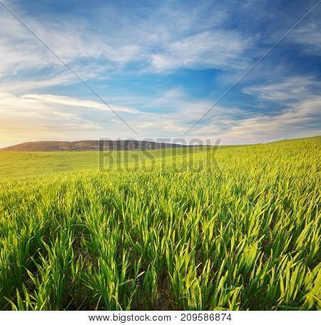 Sunrise in meadow. Nature composition.