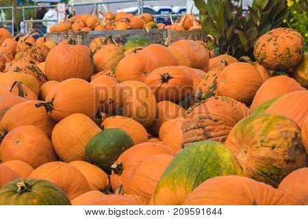 Autumn/Fall seasonal pumpkins at the pumpkin farm