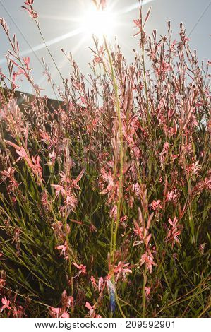 Pink Flower bush with sunlight shining through