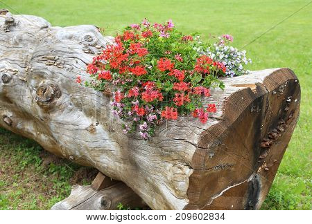 Beautiful Flowerpot Created By A Hollow Tree With Flowers And Ge