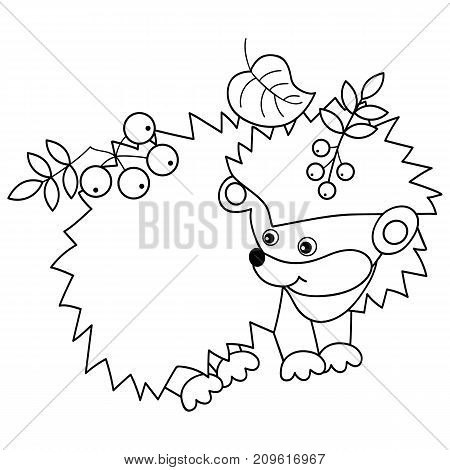 Vector black and white cute hedgehog carrying leaves and berries on spines. Vector hedgehog. Hedgehog vector illustration