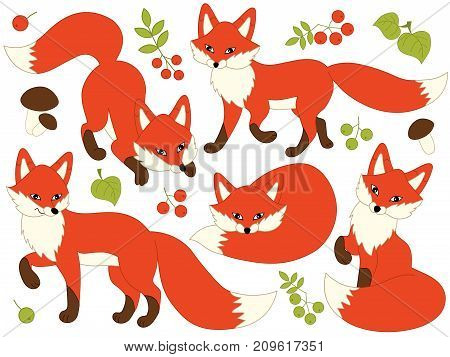 Vector set of cute cartoon foxes, leaves, berries and mushrooms. Vector fox. Foxes vector illustration