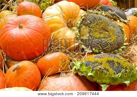 Agricultural products. Sunflower and pumpkin. Fresh produce background