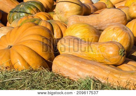 Orange pumpkins of different shapes close-up. Fresh produce background