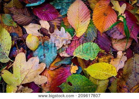 nice abstract background with autumn leafage in forest