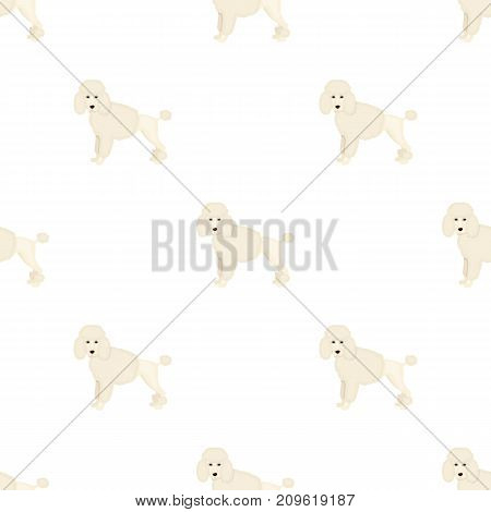Poodle, single icon in cartoon style.Poodle, vector symbol stock illustration .